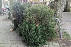 Árboles de Navidad desechados tras las fiestas (Colonia)