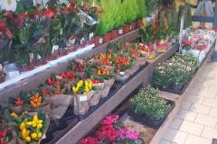 Flores en la entrada de un supermercado Rewe (Münster)