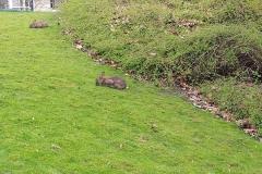 Conejos en die Promenade (Münster)