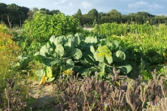 Verduras de un huerto en Münster
