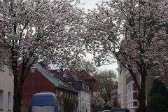 La primavera en Münster